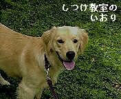 Roo's Web Site