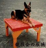 I love German Shepherd Dog